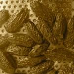 La fève Tonka vient du fruit du teck brésilien. Elle a une saveur de vanille et de réglisse.